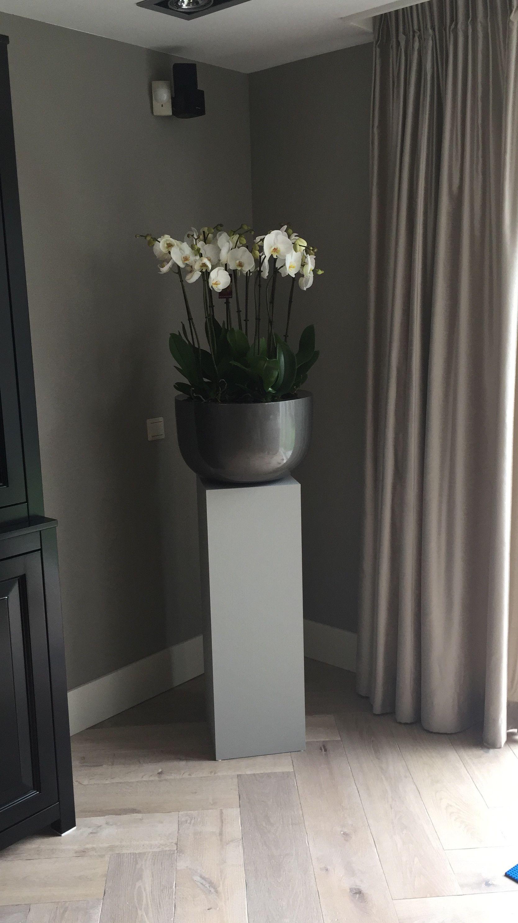 Pot Op Sokkel Phalaenopsis Pilaar Styling Woonkamer Huis Interieur Interieur Woonkamer Woonkamer Decoratie