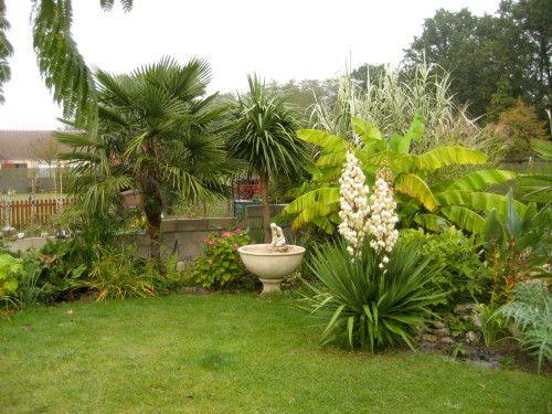 Yucca gloriosa a balcony garden pinterest jardin for Plante exotique exterieur