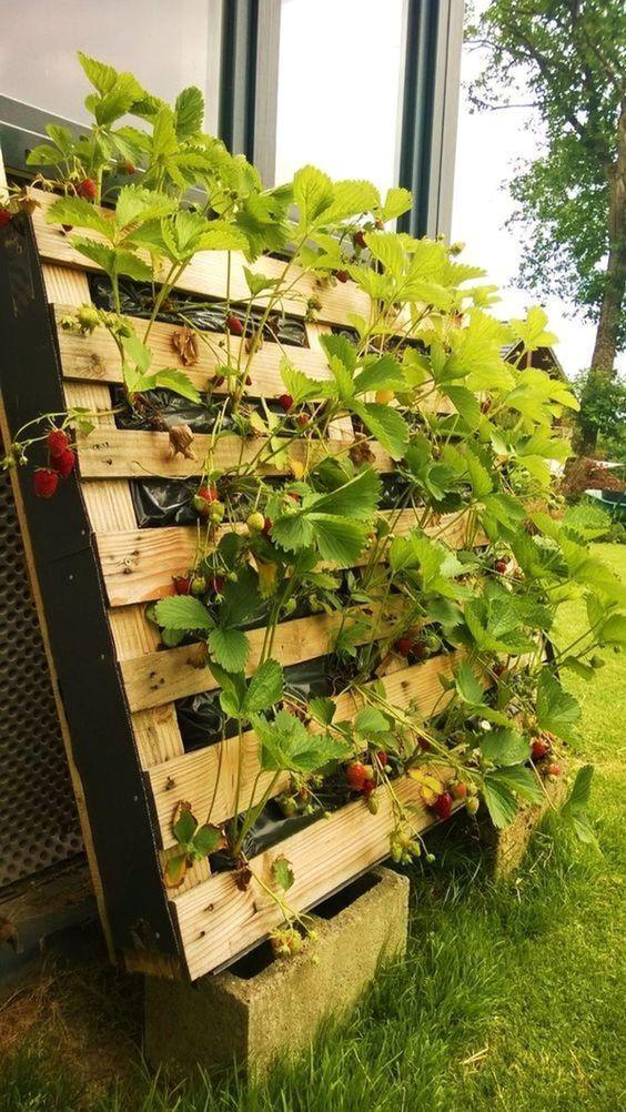 Pallets in the garden: useful DIY gardening ideas