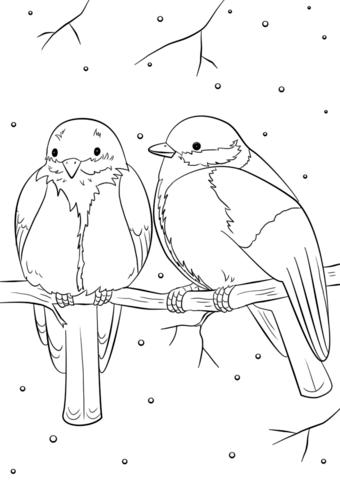 Winter Birds Kolorowanka Bird Coloring Pages Coloring Pages Winter Animal Coloring Pages