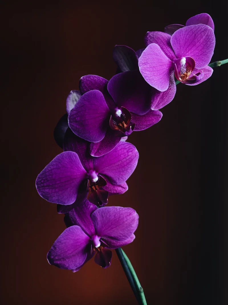 500 Orchid Pictures Download Free Images Stock Photos On Unsplash Orchid Wallpaper Purple Orchids Orchid Flower