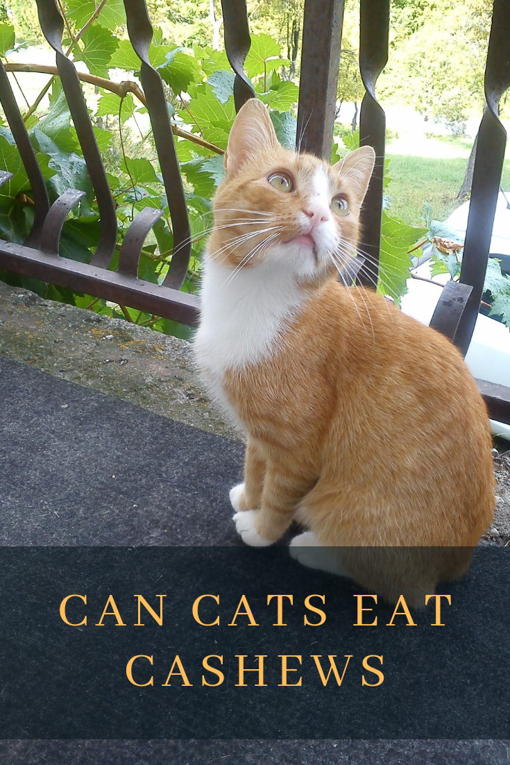 ᐉ Can Cats Eat Cashews Cats How All About Cats! Cats