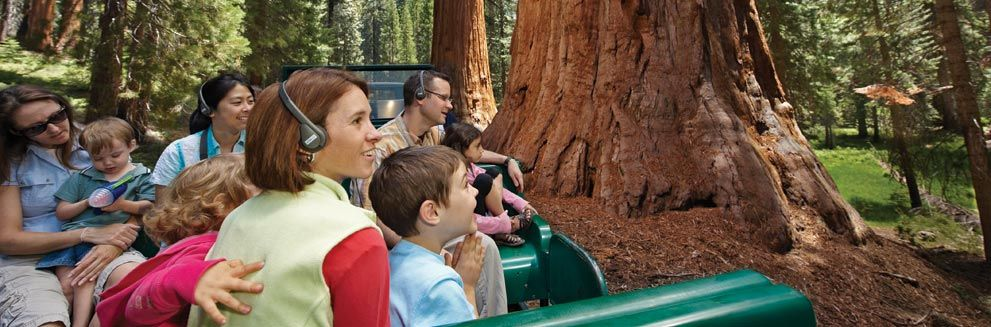 The Big Trees Tram Tour is a fascinating audio tour of the Mariposa Grove of Giant Sequoias in Yosemite National Park