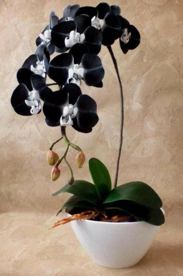 Untitled In 2020 Orchid Flower Arrangements Unusual Flowers Beautiful Orchids