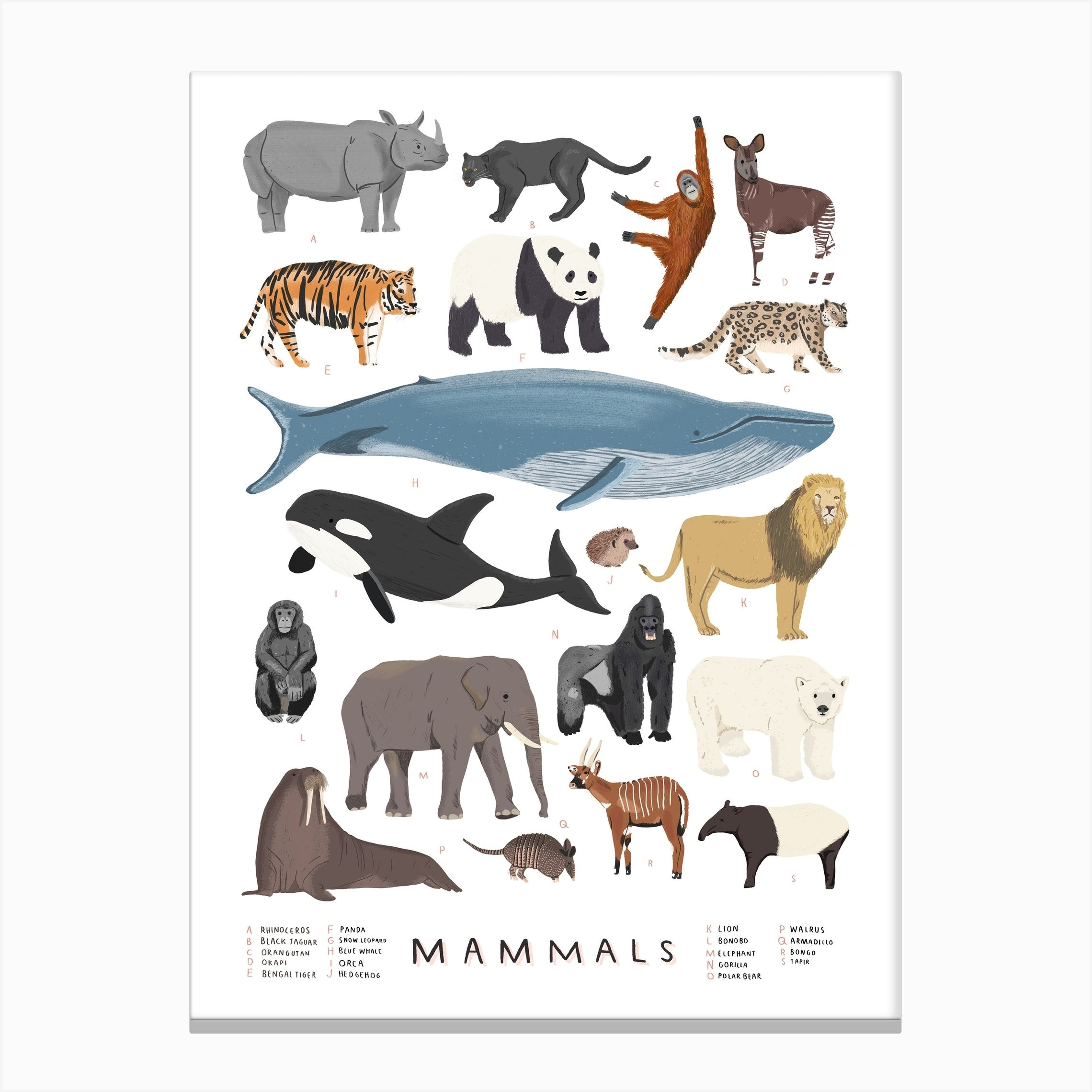Mammals Print Canvas Print In 2020 Illustration Print Animal Illustration Kids Room Art