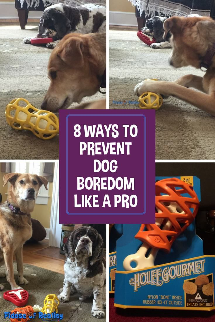 8 Ways To Prevent Dog Boredom Like A Pro Dog Boredom Toys For