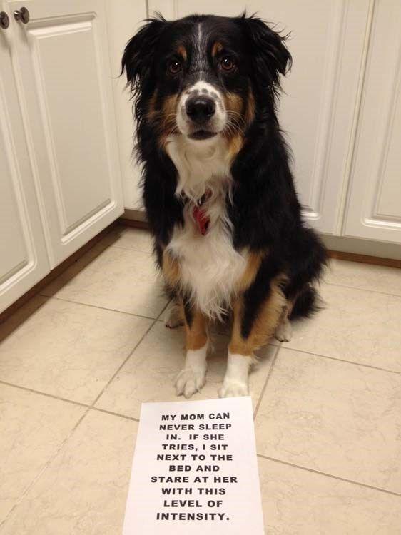 30+ Hilariously Perfect Examples Of Dog Shaming - Memebase - Funny Memes