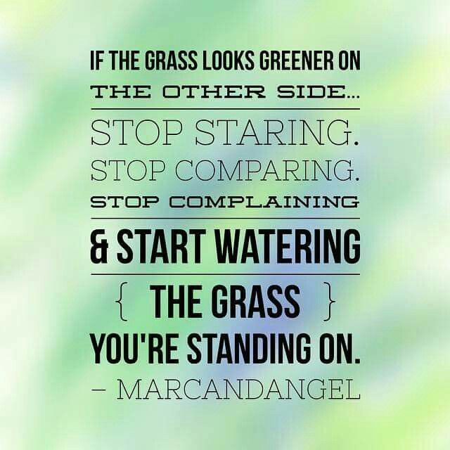 Stop Staring Stop Comparing Stop Complaining Water Your Own