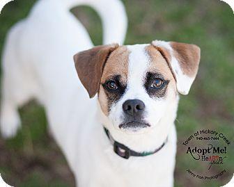 Hickory Creek Tx Rat Terrier Beagle Mix Meet Gus A Dog For