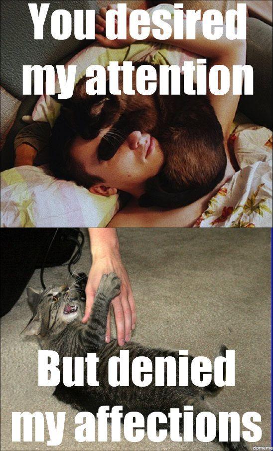 Mumford and Cats.