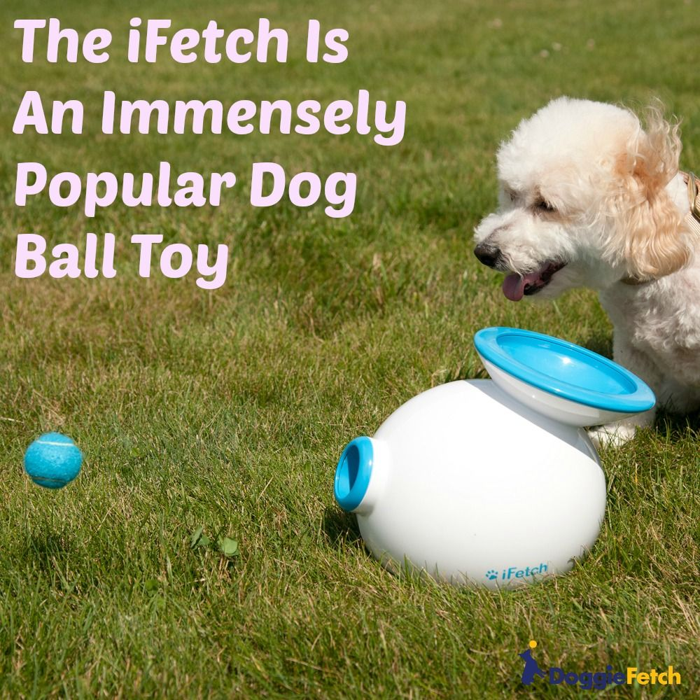 iFetch Review All About the Popular Dog Ball Launcher