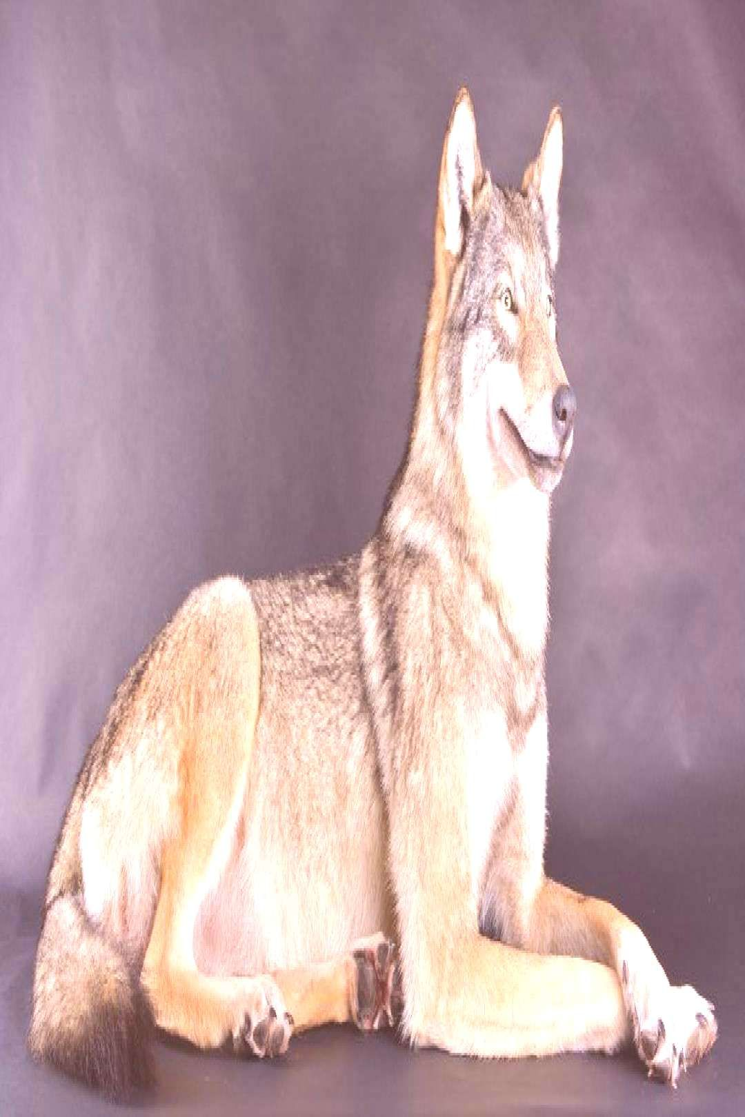 Real TaxiderYou can find Taxidermy and more on our websiteReal Taxider