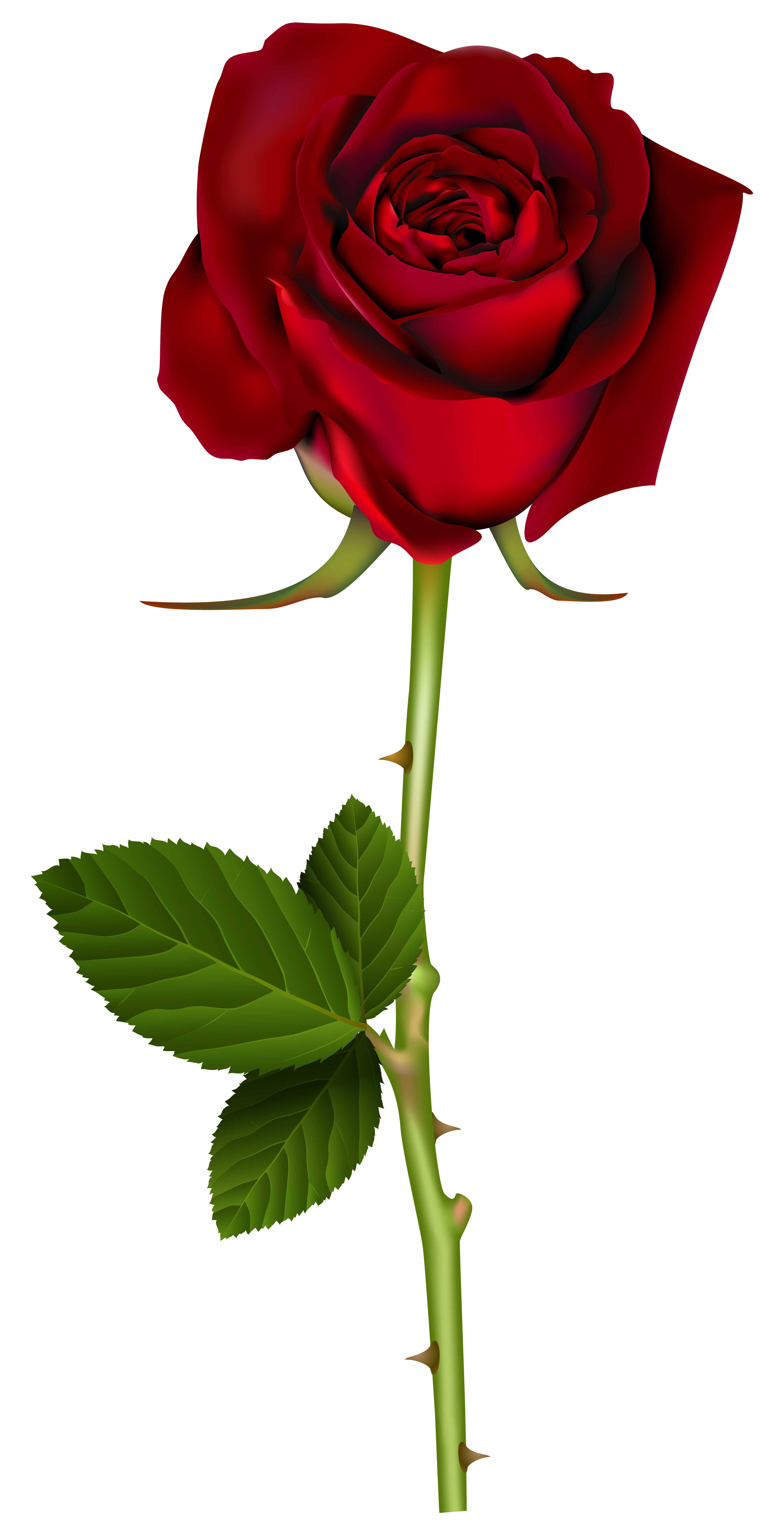 png Flower png SYEDIMRAN Background Flowers