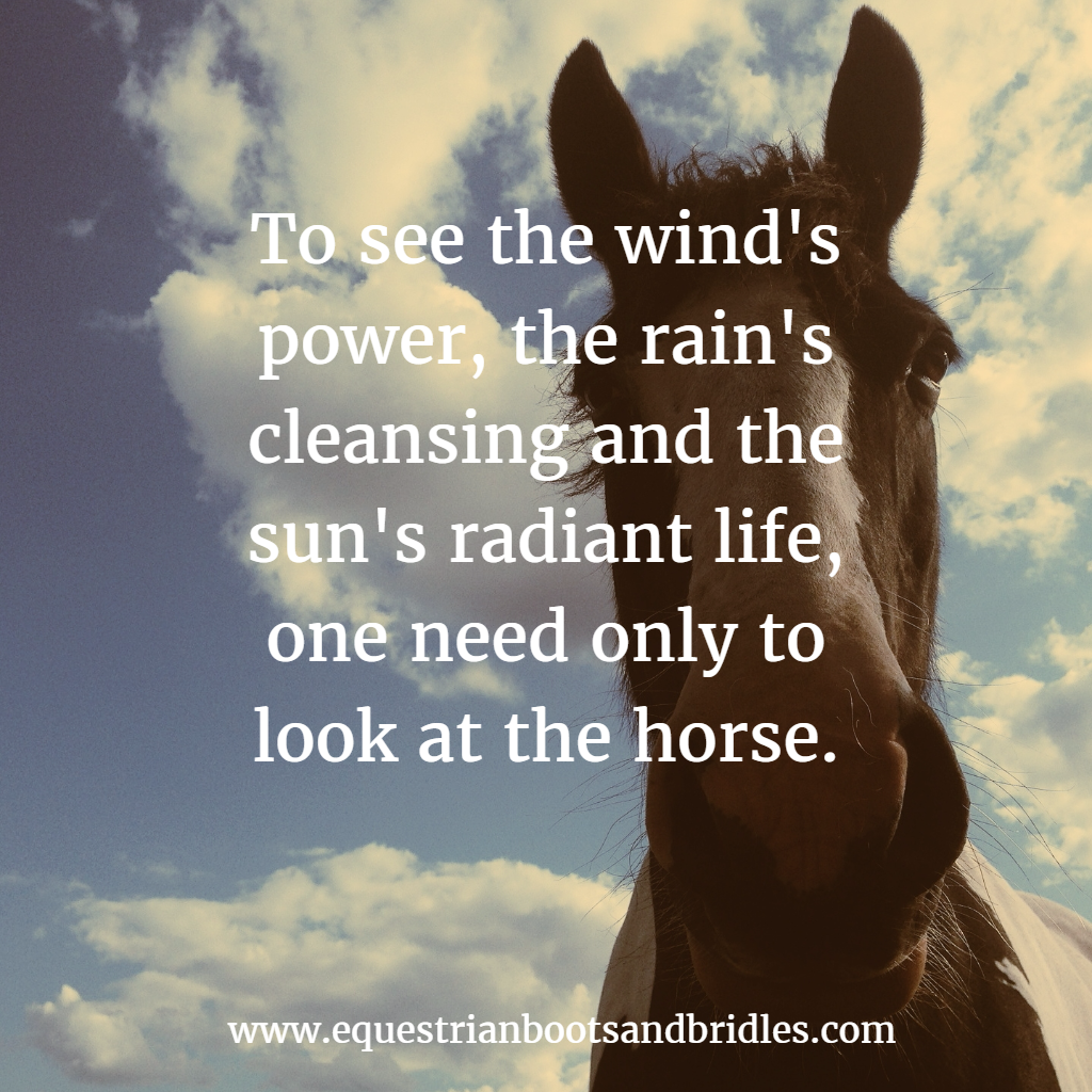 To see the wind's power, look at the horse quote | Horses ...