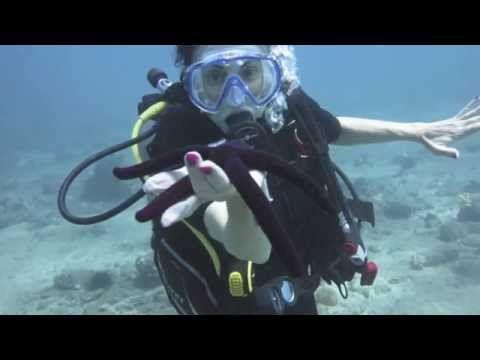 Four Reasons To Try Scuba Diving Scuba Diving Scuba Diving