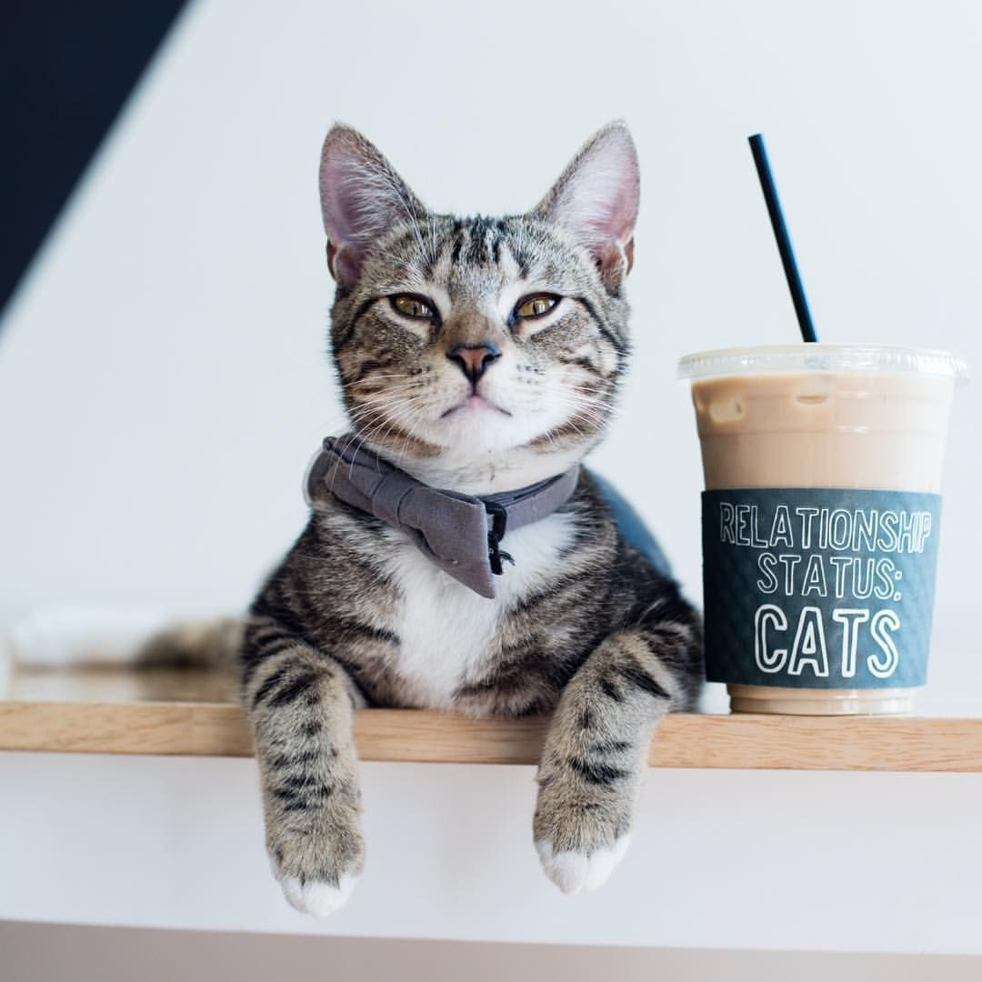 Crumbs Whiskers Cat Cafe Cat Cafe Cats And Kittens Cats