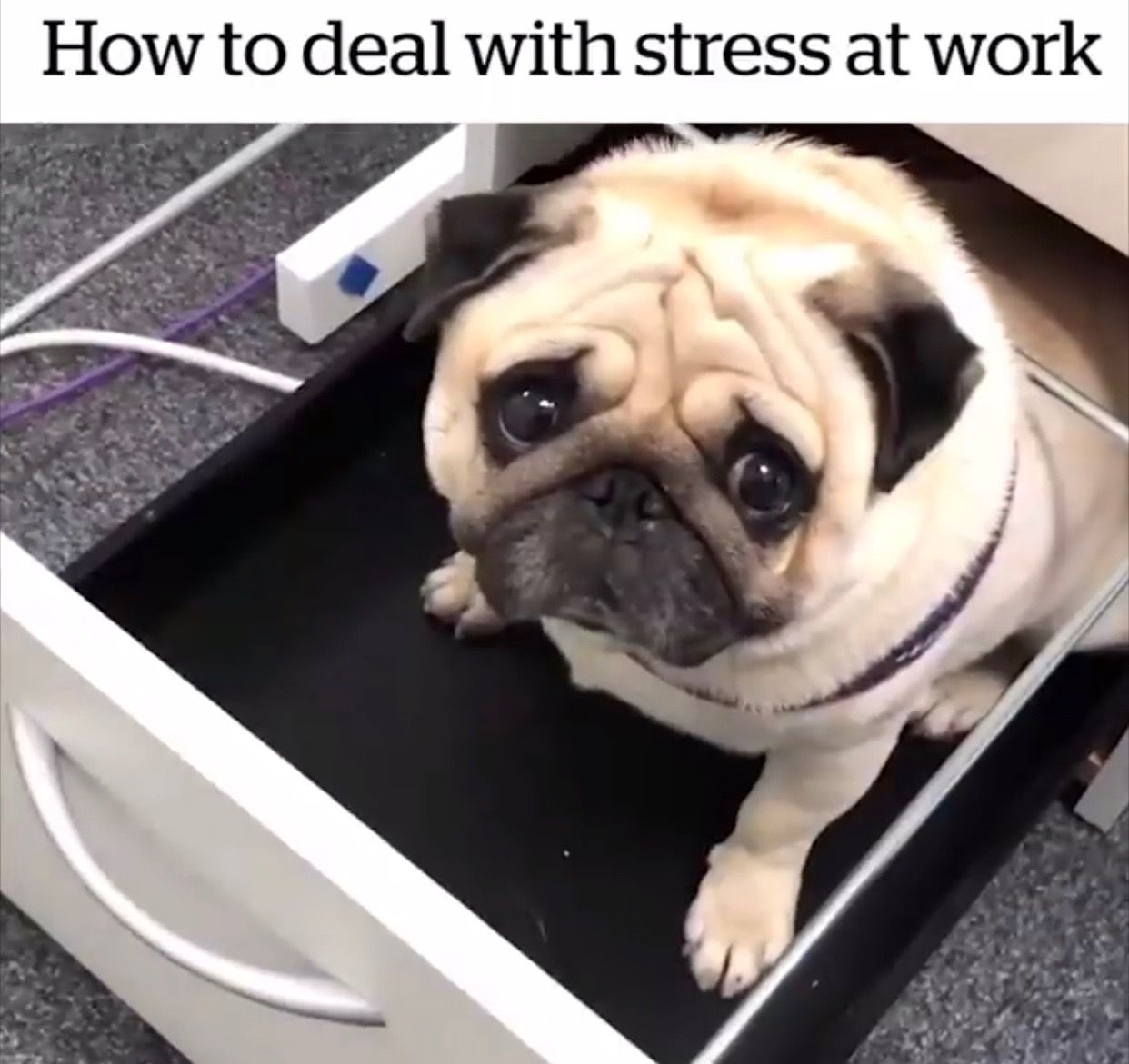 Pin By April Addington On Join The Pugs Friends Pugs Funny Pug