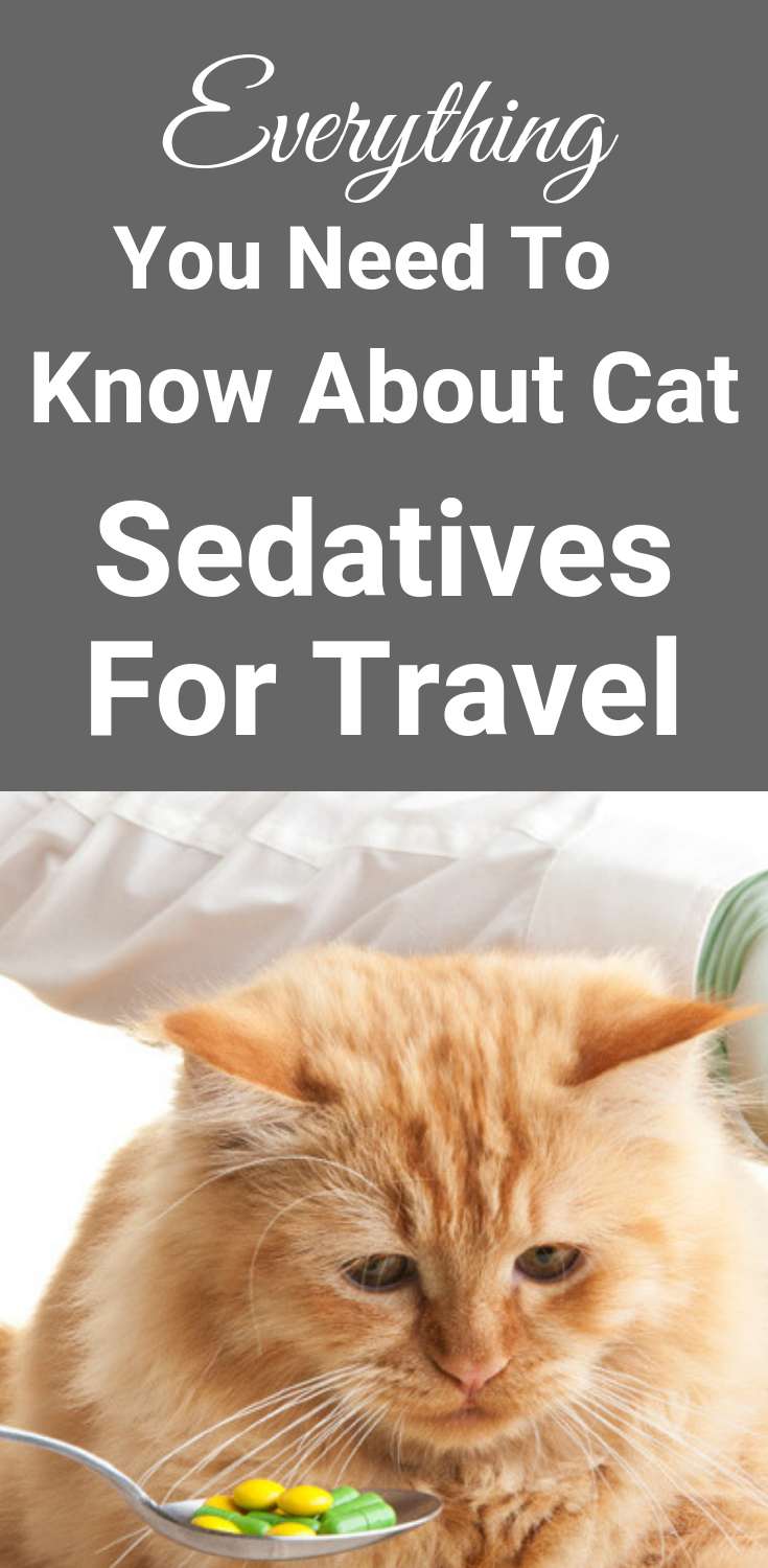 Everything You Need To Know About Cat Sedatives For Travel Calming Cat Cat Travel Camping With Cats