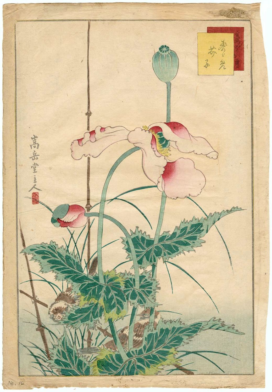 Nakayama Sûgakudô: No. 16, Sparrows and Poppies