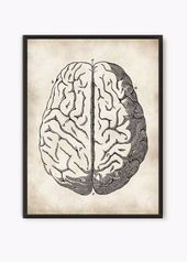 Human Brain poster gift for doctor human body medicine student gift, anatomical ... -  - #ANATOMICAL #Body #Brain #Doctor #Gift #Human #medicine #Poster #student