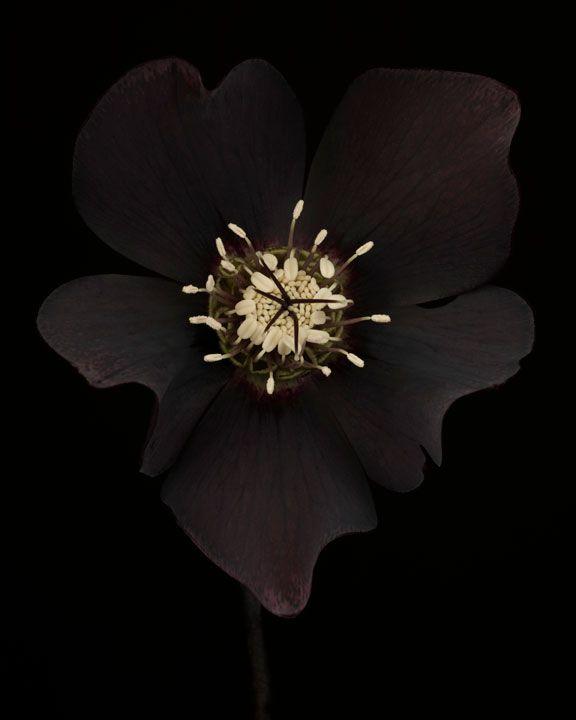 Ron van Dongen Photography