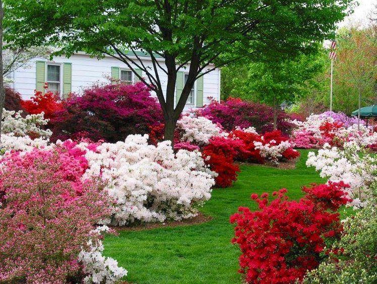 Pin By Babi Soares On Flower Landscapes Azaleas Landscaping Beautiful Flowers Garden Azaleas Garden