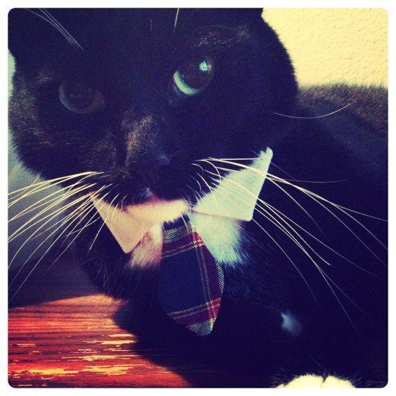 3f7baadc4bd976fce0faf3b54e0aaf84 - How To Get My Cat To Wear A Collar