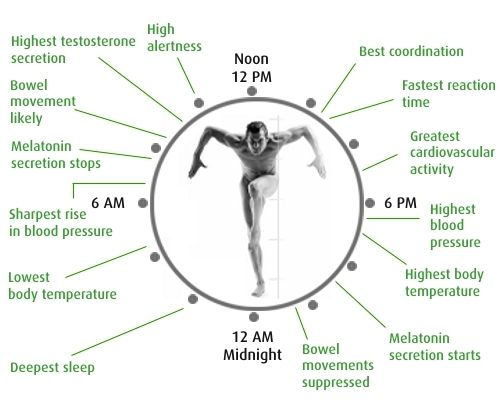 Scientists redraw the blueprint of the bodys biological clock scientists redraw the blueprint of the bodys biological clock malvernweather Choice Image