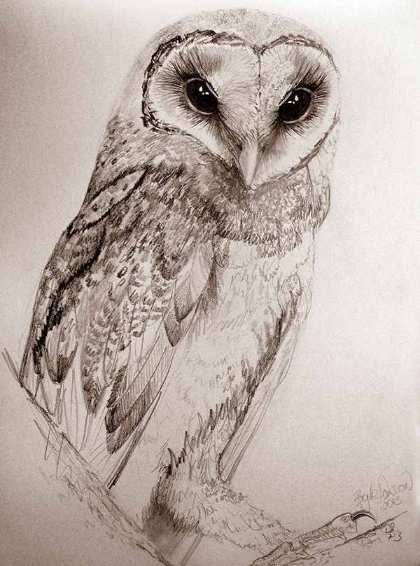 When paint dries up, there's always graphite. Life drawing right through to owls