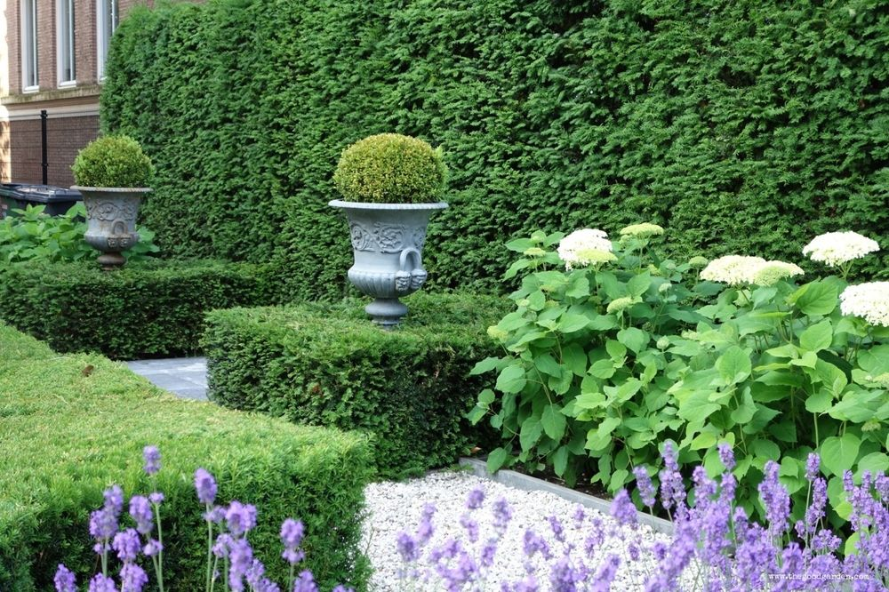 Best garden hedges | Garden hedges, Front garden, Front ...