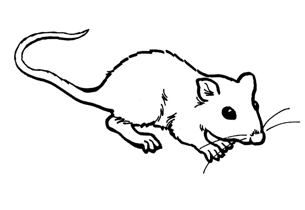 Free Printable Rat Coloring Pages For Kids Rat Coloring Pages