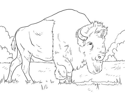 Bison Grazing on Grasses Coloring page | Coloring pages ...