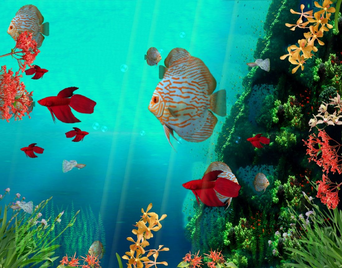 Download Coral Reef Aquarium 3D Animated Wallpaper | DesktopAnimated.com
