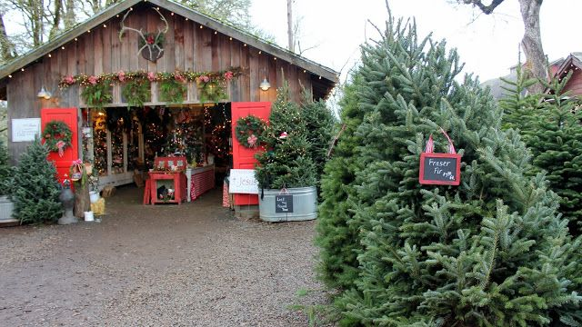 Let The Festivities Begin Christmas Farm Cool Christmas Trees Christmas Tree Farm