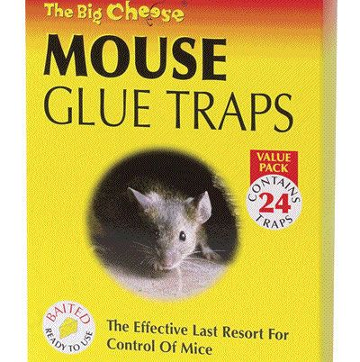 How to Make Sticky Glue for Mouse Trap | Glue traps, Mouse ...