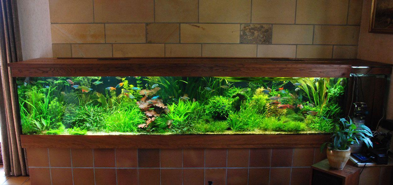 My dream rainbowfish tank aquascapes pinterest for Dream of fish tank