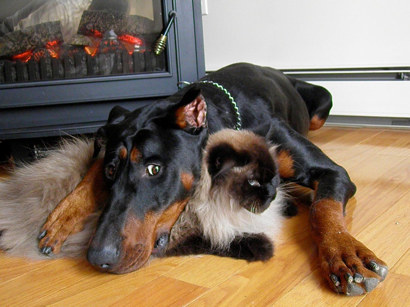 Vote in the Proud Pet Parent Photo Contest!