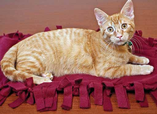Make A Fleece Blanket For Homeless Cats And Kittens Michigan Humane Society Cats And Kittens Diy Pet Bed Kittens