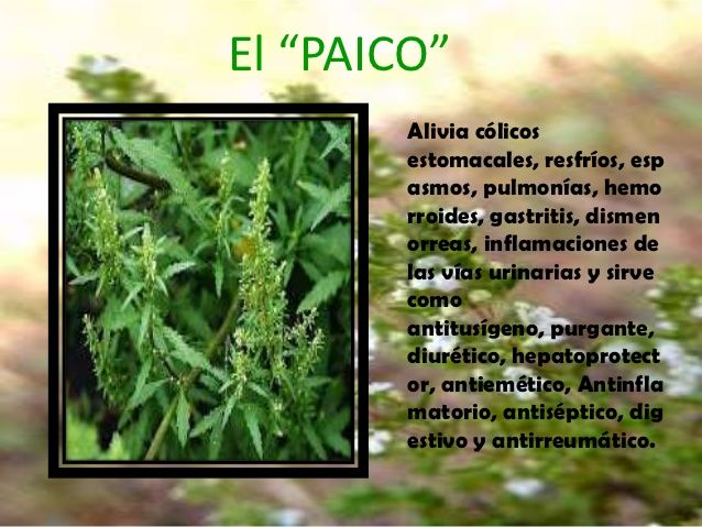 Plantas Medicinales Lidia Mamani 4 638 Jpg 638 479 Plantas