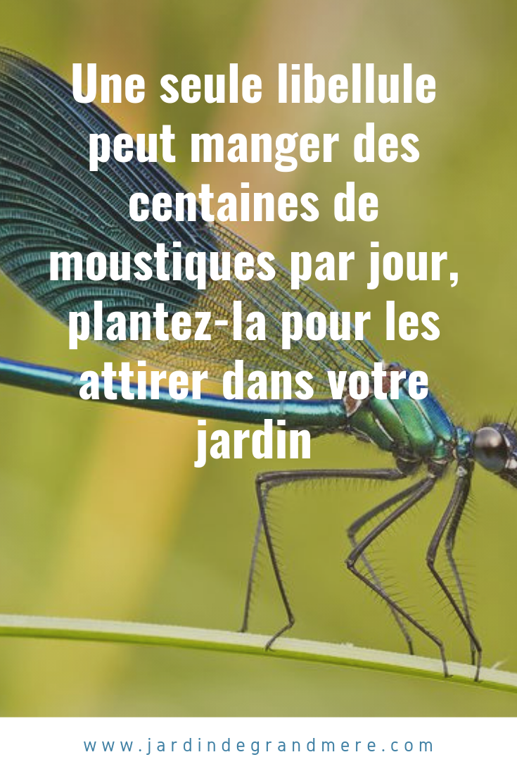 Construisez un bassin libellules avec les plantes - Plantes aquatiques pour bassin de jardin ...