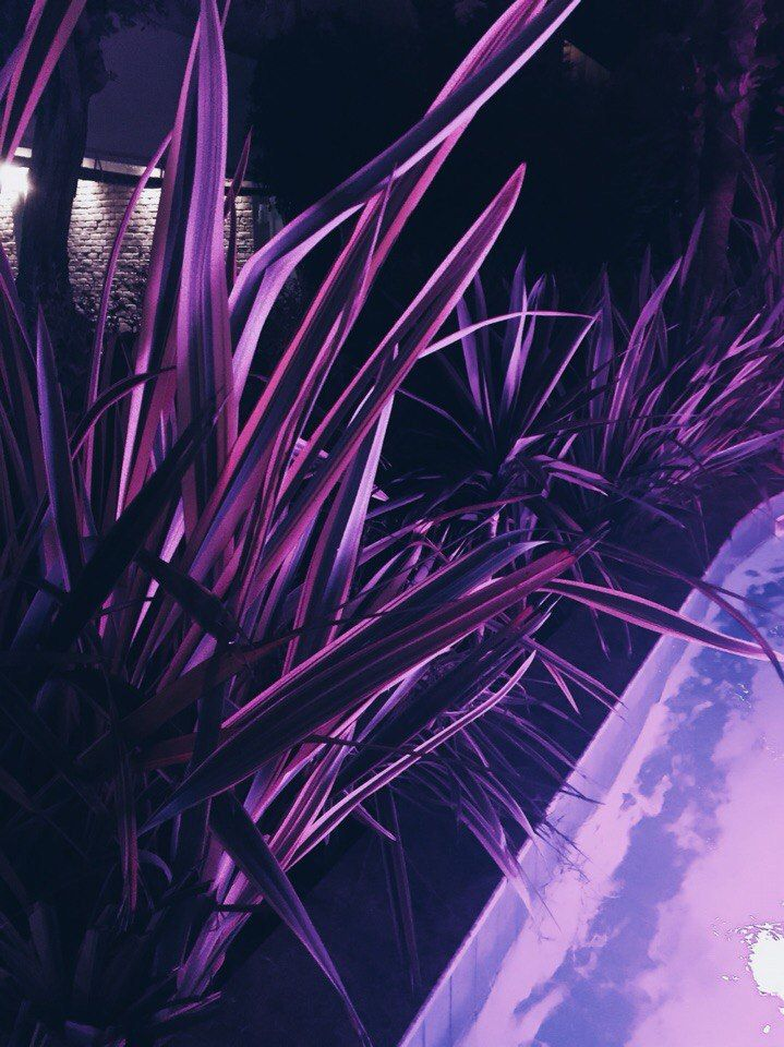 NEON SAMURAI  : Фото