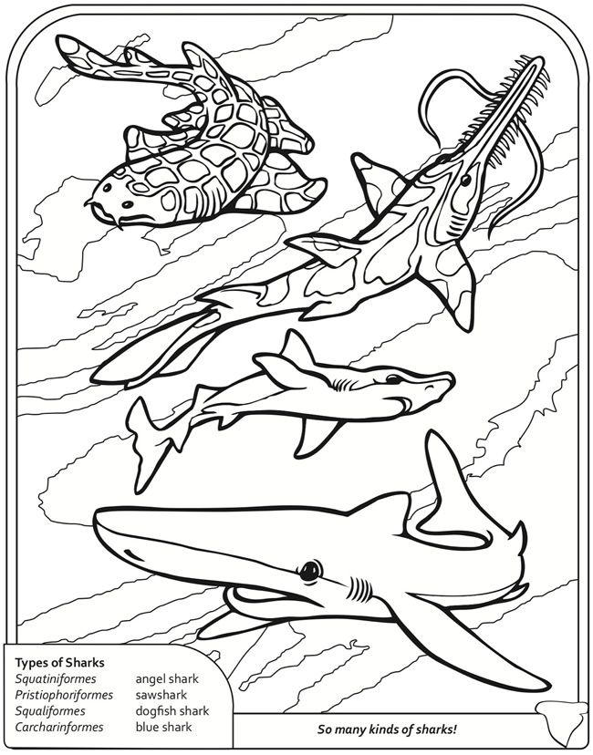 Sharks Coloring Book Dover Publications Shark Coloring Pages