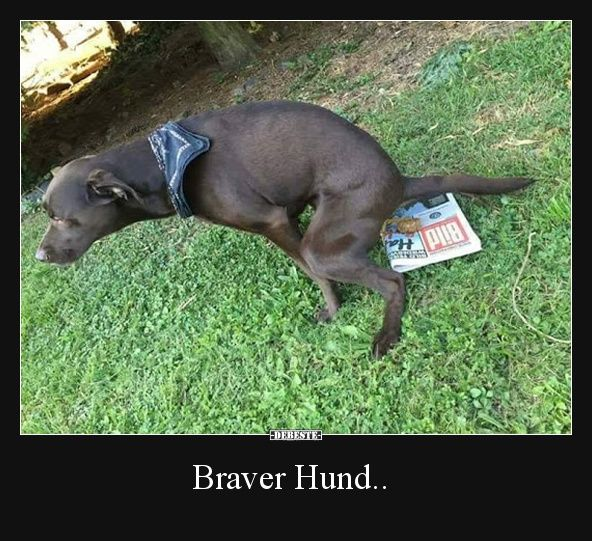 Braver Hund..