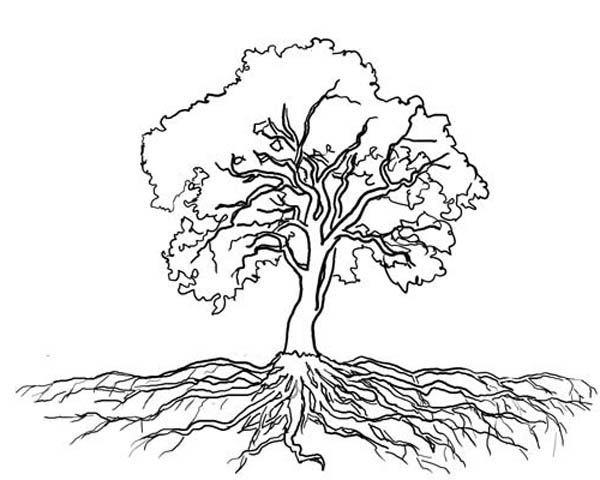 Oak Tree Massive Roots Coloring Page Oak Tree Massive Roots Coloring Page Color Luna Cizim Agac Doga