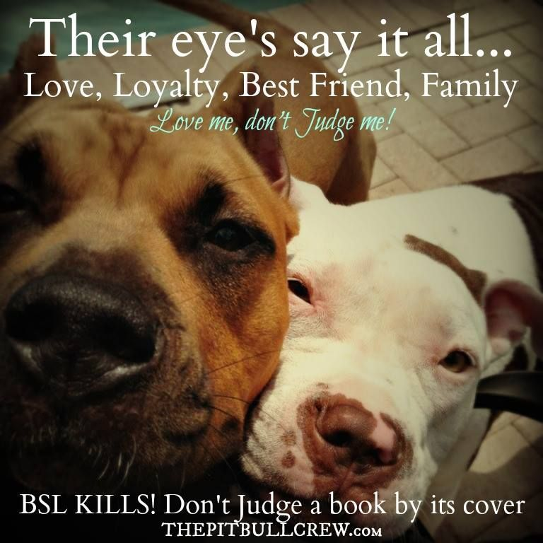 Why Doesn T Breed Specific Legislation Work Breed Specific Laws