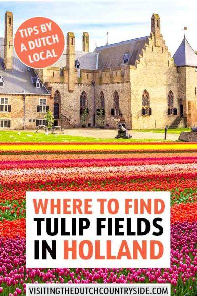 Local Guide To Free Tulip Fields In Top Of North Noord Holland The Netherlands Resor Och Destinationer