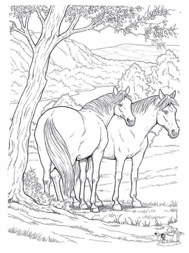ausmalbilder wilde pferde  ausmalbilder pferde zum