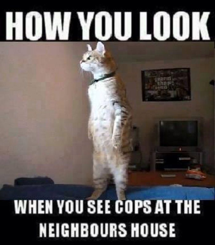 3f803950e764e7ed91192b26f47fce13 how you look cat meme funny dirty adult jokes, memes, cartoons