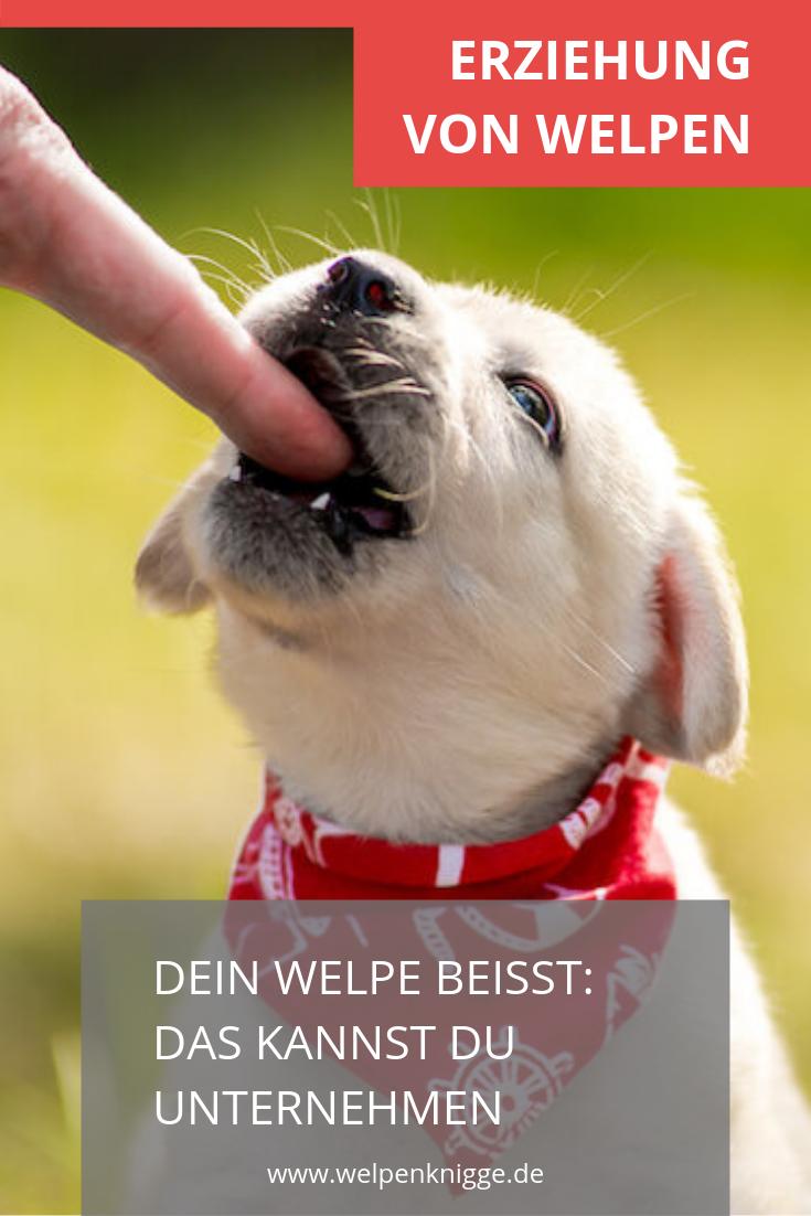 Welpe Beisst Das Kannst Du Dagegen Unternehmen Welpen Hunde Welpen Erziehung Babyhunde