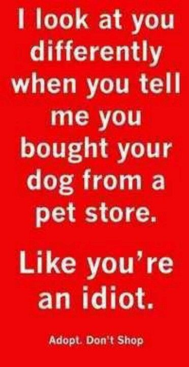 Oh, I look at you differently alright! I also picture the faces of all the homeless animals killed thanks to people who buy from breeders/pet stores.